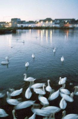 Galway_night_web