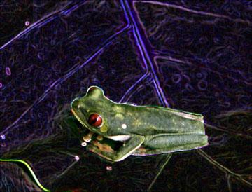 Neon_froggie_web